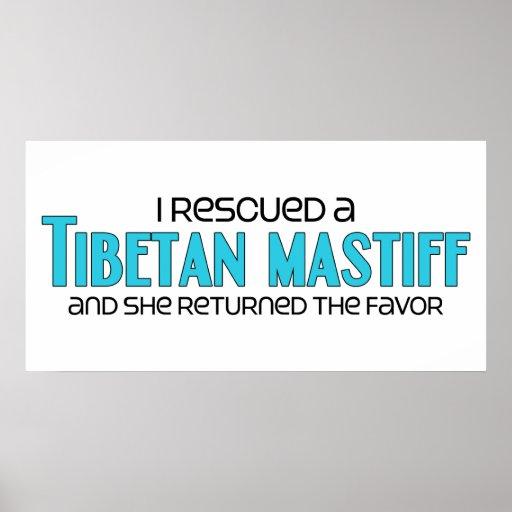 Ich rettete einen tibetanischen Mastiff (weibliche Poster