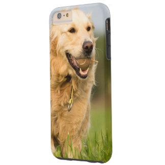 Ich rufe schützenden Fall S6 mit golden retriever Tough iPhone 6 Plus Hülle