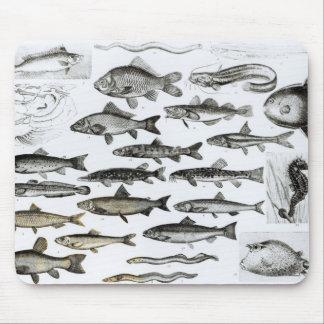 Ichthyologie, knöcherne Fische, Marisipobranchs Mousepad