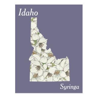 Idaho-Staats-Blumen-Collagen-Karte Postkarte