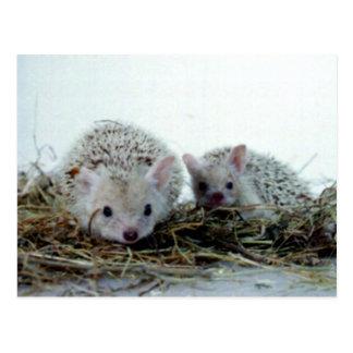 Igel als Haustiere Postkarte