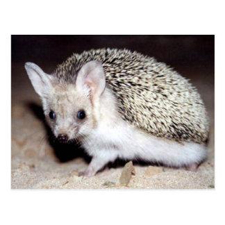 Igel - das stachelige Säugetier Postkarte