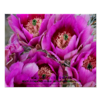 Igels-Kaktus-Blüten Poster