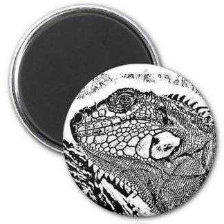 Iguana black/white magnets