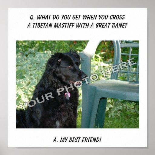 Ihr Foto hier! Bester Freundtibetanischer Mastiff- Plakatdruck