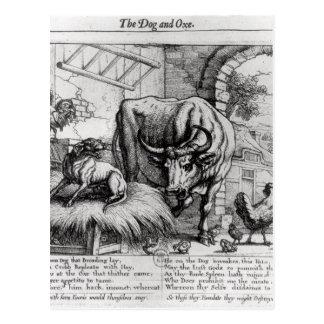 Illustration für 'den Hund und das Ox Postkarte