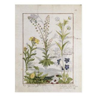 """Illustration vom """"Buch einfacher Medizin"""" 2 Postkarte"""