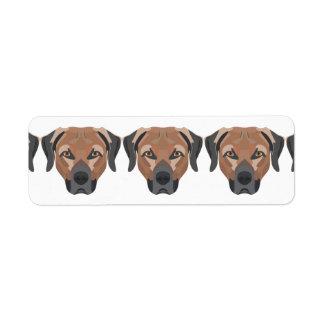 Illustrations-Hund Brown Labrador