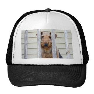 """Im Doghouse "" Caps"