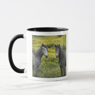 Im Western Irland, zwei Pferde mit lang Tasse
