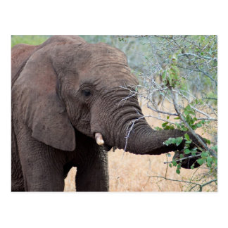 Imbiss-Zeit - Elefant-Postkarte Postkarte