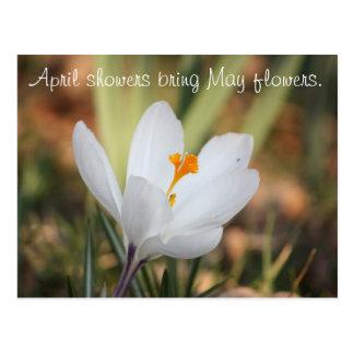 IMG_0371, April-Duschen holen Mai-Blumen Postkarte