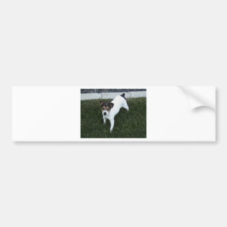 IMG_1349.JPG entzückender Jack-Russell-Welpenhund Autoaufkleber