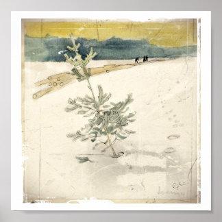 Immergrün Posterdrucke
