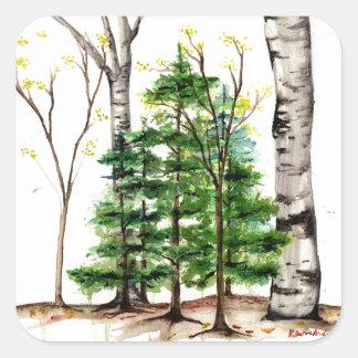 immergrüner Baumaufkleber Quadratischer Aufkleber