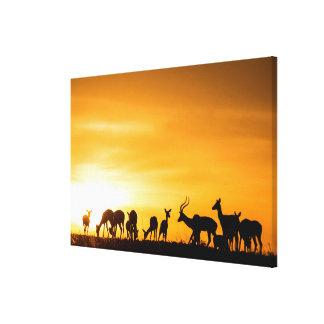 Impala-Herde am Sonnenuntergang Leinwanddruck