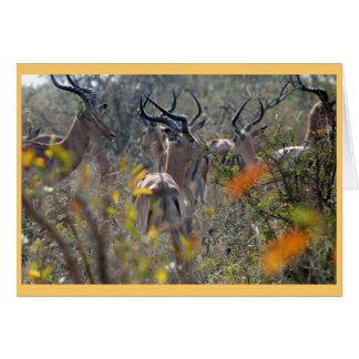 Impala im Busch Karte