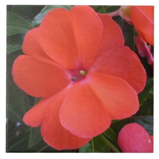 Impatien Orange Neu-Guinea Keramikfliese