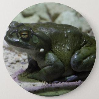 Incilius alvarius runder button 15,3 cm