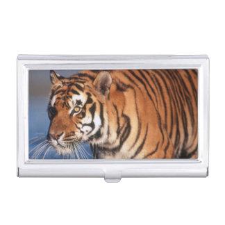 Indien, bengalischer Tiger (Panthera der Tigris) 2 Visitenkarten Etui