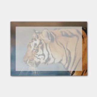 Indien, bengalischer Tiger (Panthera der Tigris) 4 Post-it Klebezettel