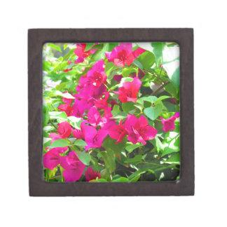 Indien-Reise-Blumen-Bouganvilla-Blumenemblem Kiste