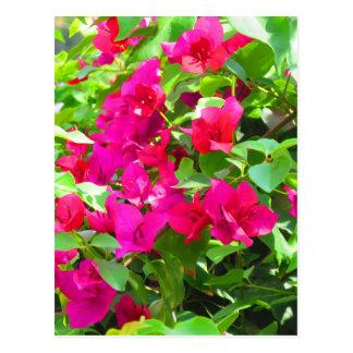 Indien-Reise-Blumen-Bouganvilla-Blumenemblem Postkarte