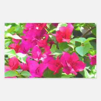 Indien-Reise-Blumen-Bouganvilla-Blumenemblem Rechteckiger Aufkleber