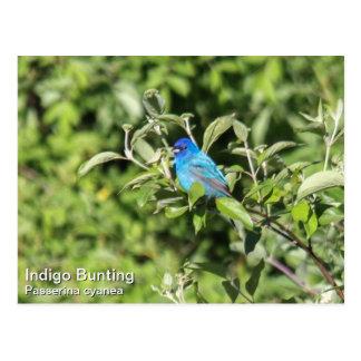 Indigo-Flagge Postkarte