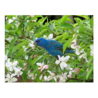 Indigo-Flagge und Blüten - Vogel Postkarte