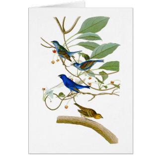 Indigo-Flaggen-John James Audubon-Vögel von Karte