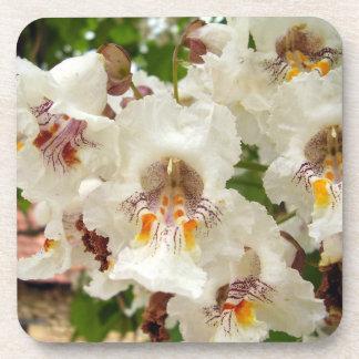 Indische Bohnen-Baum-Blumen-harter Getränkeuntersetzer
