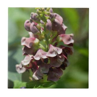 Indische Kartoffel-Wildblume Fliese