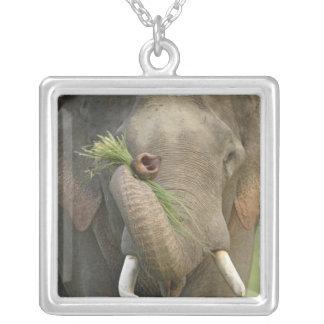 Indischer/asiatischer Elefant, der Nahrung, Versilberte Kette