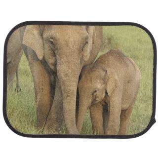 Indischer/asiatischer Elefant und Junge einer, Automatte