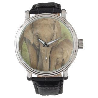 Indischer/asiatischer Elefant und Junge einer, Uhr