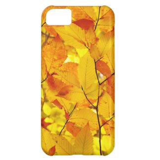 Indischer Sommer, gelber Herbst-Herbstlaub iPhone 5C Hülle