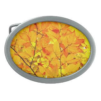Indischer Sommer, gelber Herbst-Herbstlaub Ovale Gürtelschnallen