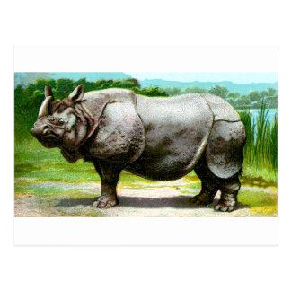 Indisches Nashorn Postkarte