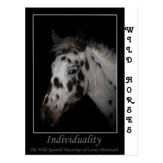 """Individualitäts-"" - wilde spanische Mustangs Postkarte"