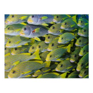 Indonesien. Schulung der Fische Postkarte