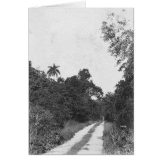 Ingraham Landstraße, Florida Everglades, 1922 Grußkarte