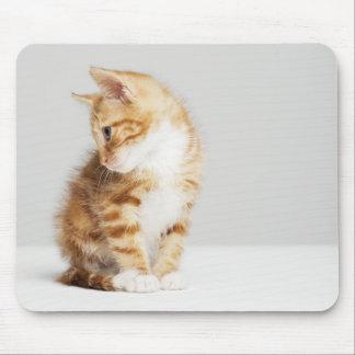 Ingwer-Kätzchen Mousepad