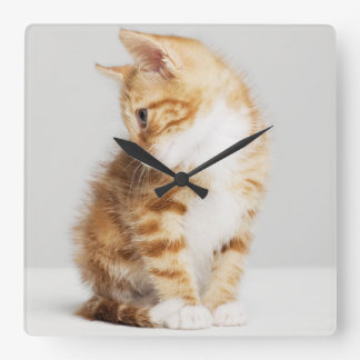Ingwer-Kätzchen Quadratische Wanduhr