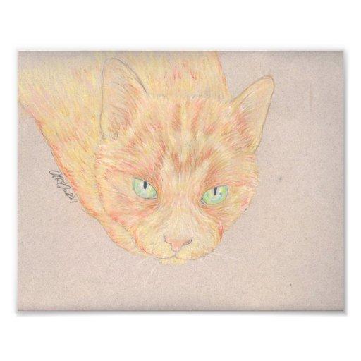 Ingwer-Katzen-Foto-Kunst