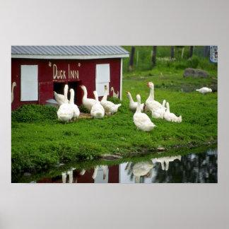 Inländische Gänse und Enten Posterdrucke