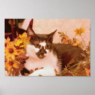 Inländische kurzhaarige Schwarzweiss-Katze gehockt Posterdrucke