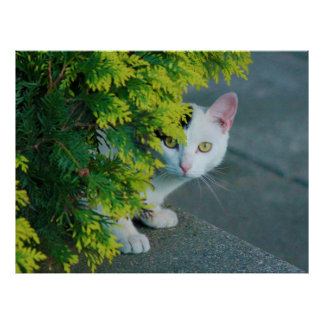 Inländisches kurzhaariges Katzen-Emporragen Poster