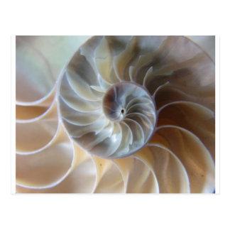 Innerer Nautilus Postkarte