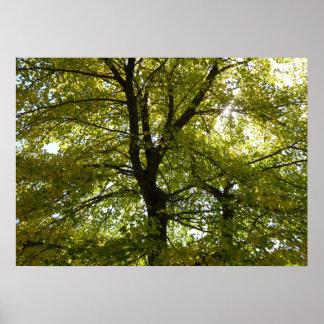 Innerhalb einer gelben Ahornbaum-Herbst-Natur Poster